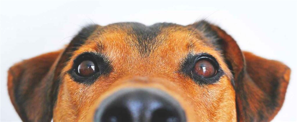 Afrastering hond: omheining tuin